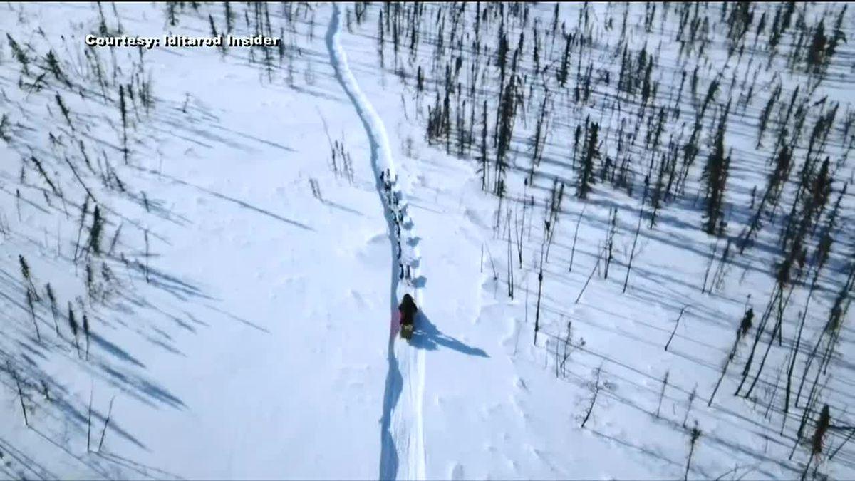 Iditarod 2021