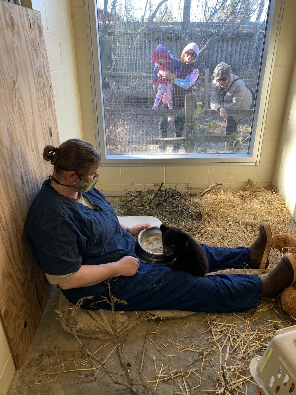 Alaska Zoo Curator Shannon Jensen feeds an orphaned black bear cub in the zoo infirmary