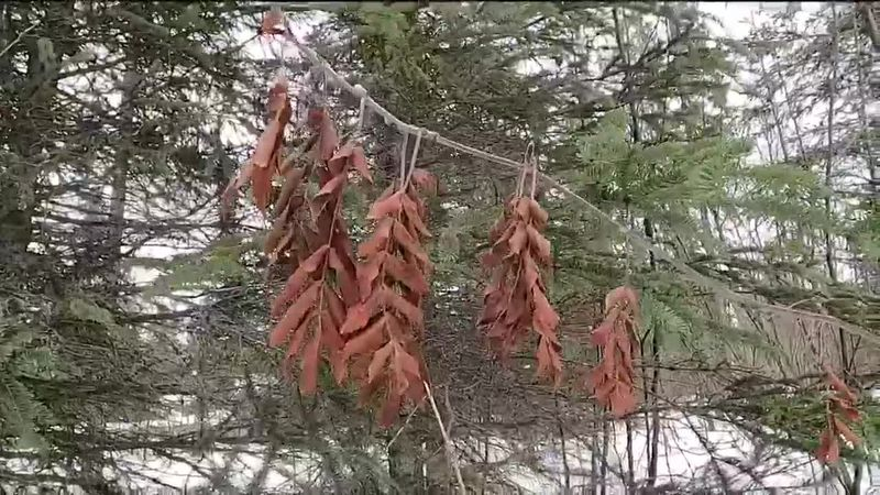Winter plant identification gives a new perspective