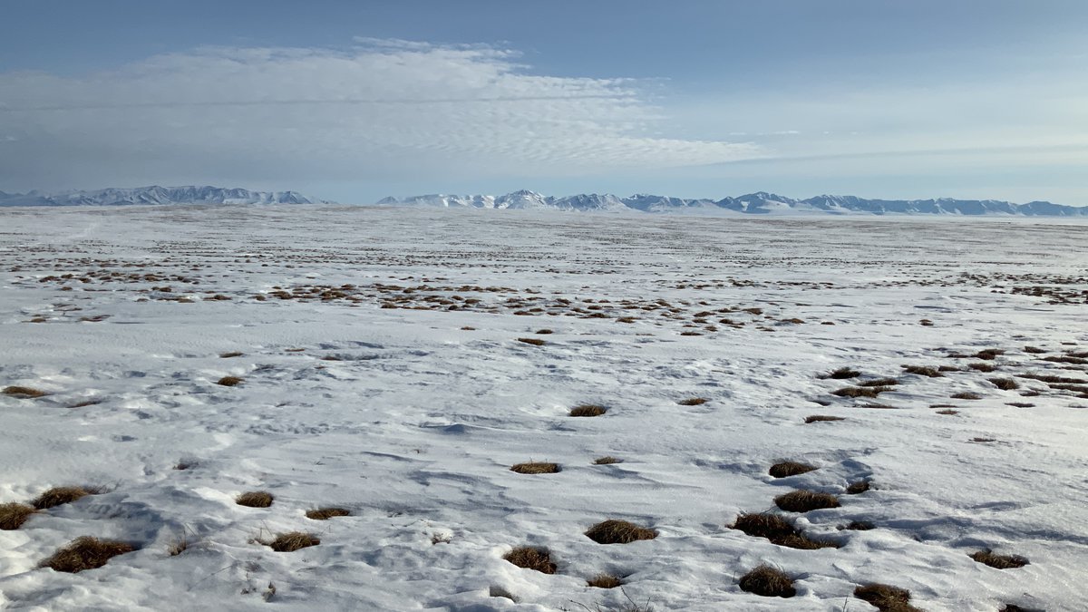 Grass pokes through the snow in the wind-scoured plains in ANWR's 1002 area.