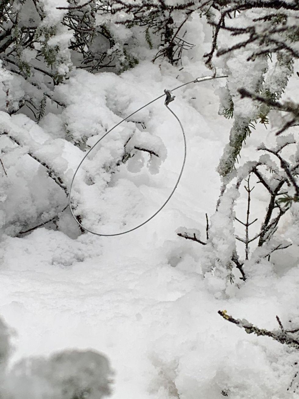 Illegal snare trap found near Hillside trail