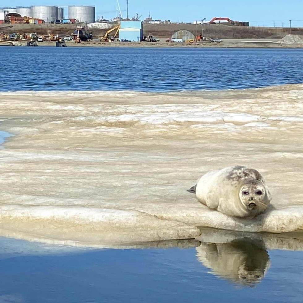 Across Alaska: Miners, servers and birders flock to Nome as pandemic restrictions ease