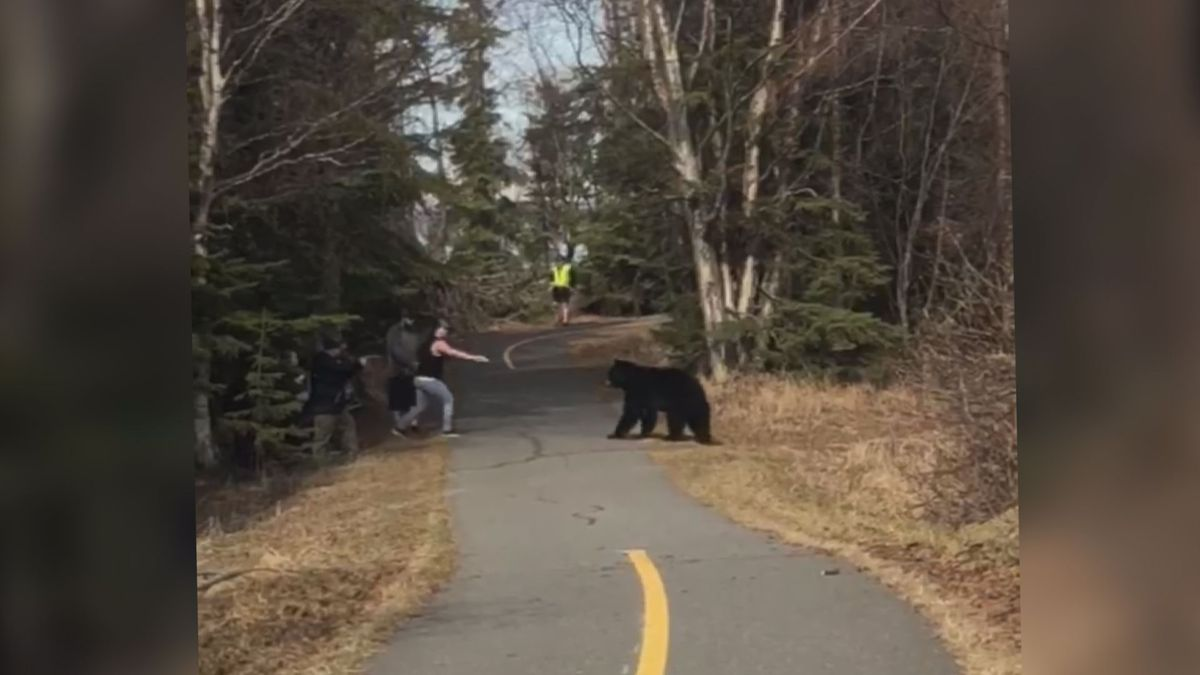 A group of pedestrians stood their ground when a curious black bear confronted them at Kincaid...